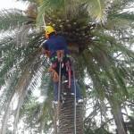 mantenimiento de la palmera