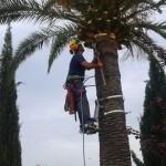 buena conservacion de la palmera